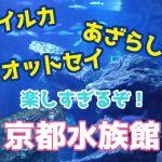 「京都水族館」でつくる楽しい思い出!オオサンショウウオと海獣たちが楽しめるスポット