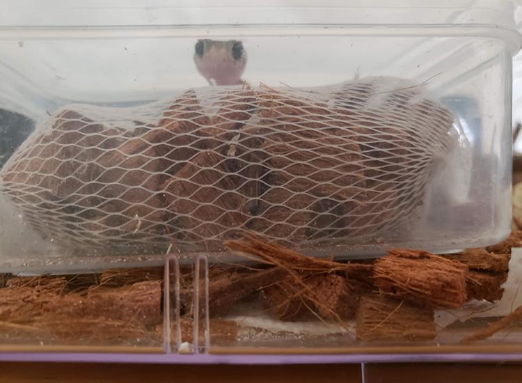 アンダーウッディサウルミリィの飼育に必要なものとわたしが行っている工夫