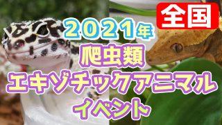 2021年の爬虫類・昆虫・エキゾチックアニマルの即売会イベント情報!【全国版】