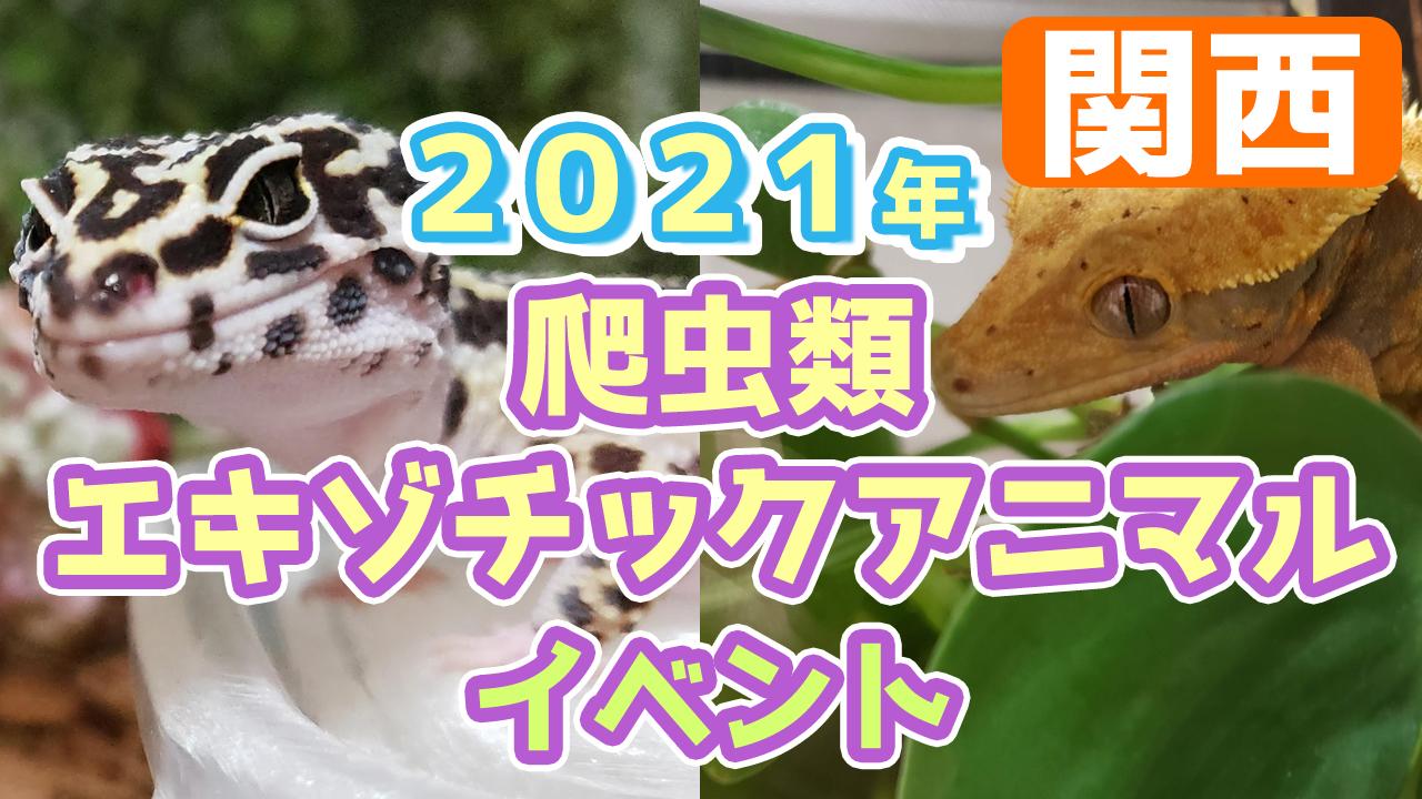 イベント 大阪 爬虫類 BLACK OUT!