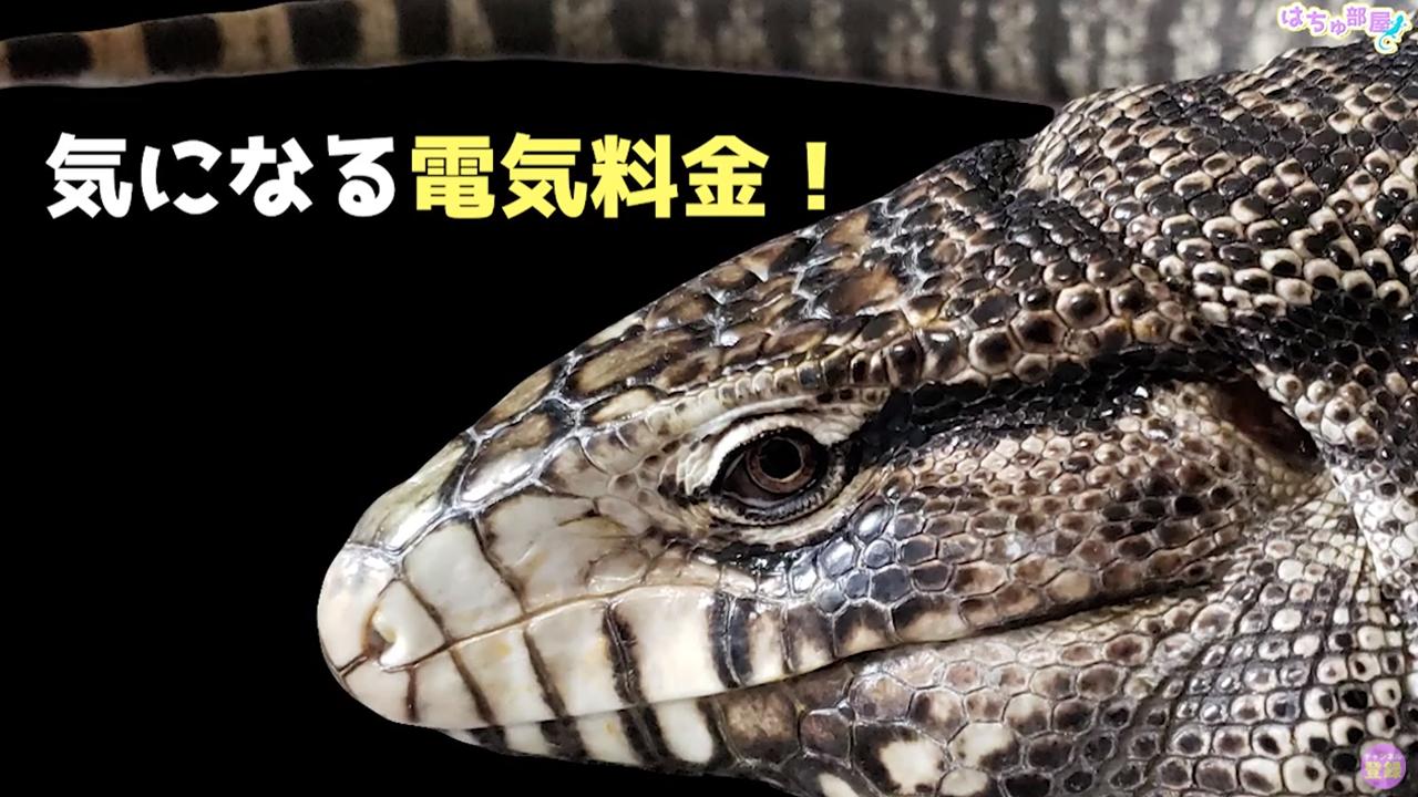 爬虫類飼育者の月間の電気代を公開!